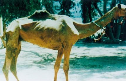 Photo of دانلود کتاب بیماری سورا در شتر
